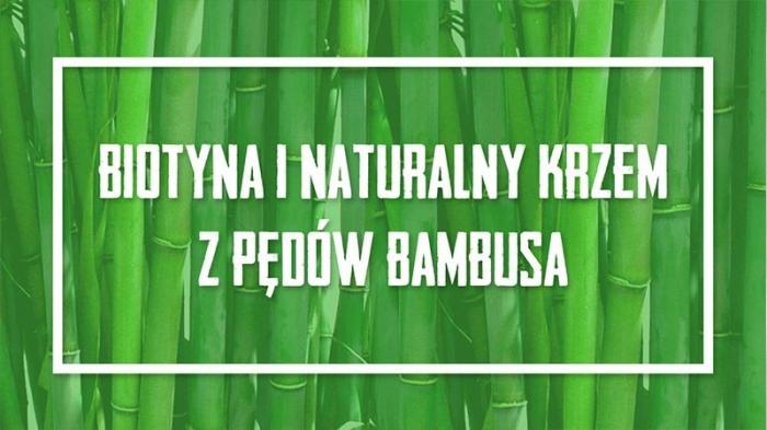 BAMBUS – niezwykła roślina